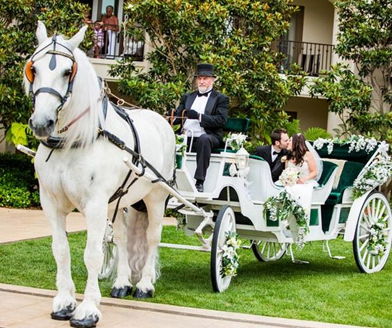 Picture5_Horse Drawn Carriage